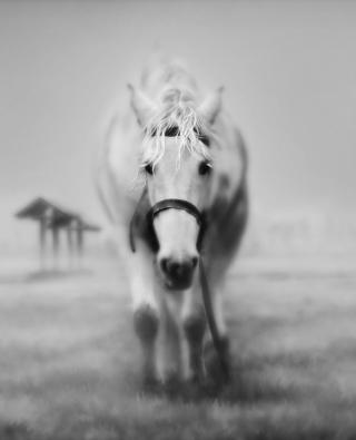 caballo-blanco-nokia-lumia